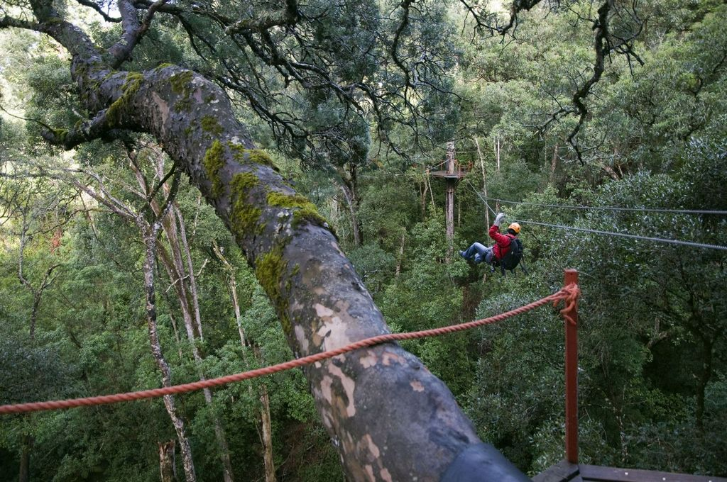 Canopy tree top tours, Tsitsikamma Forest, Western Cape